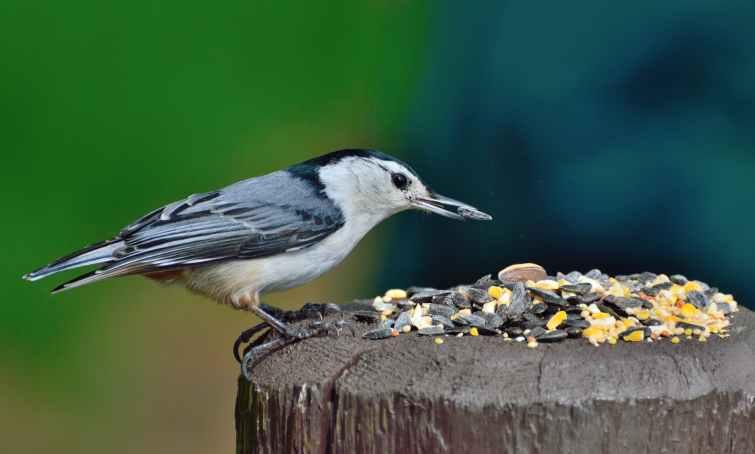 nature bird wildlife feeding