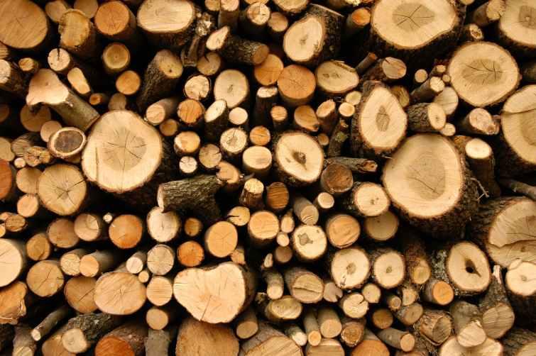 bark chopped wood cut environment