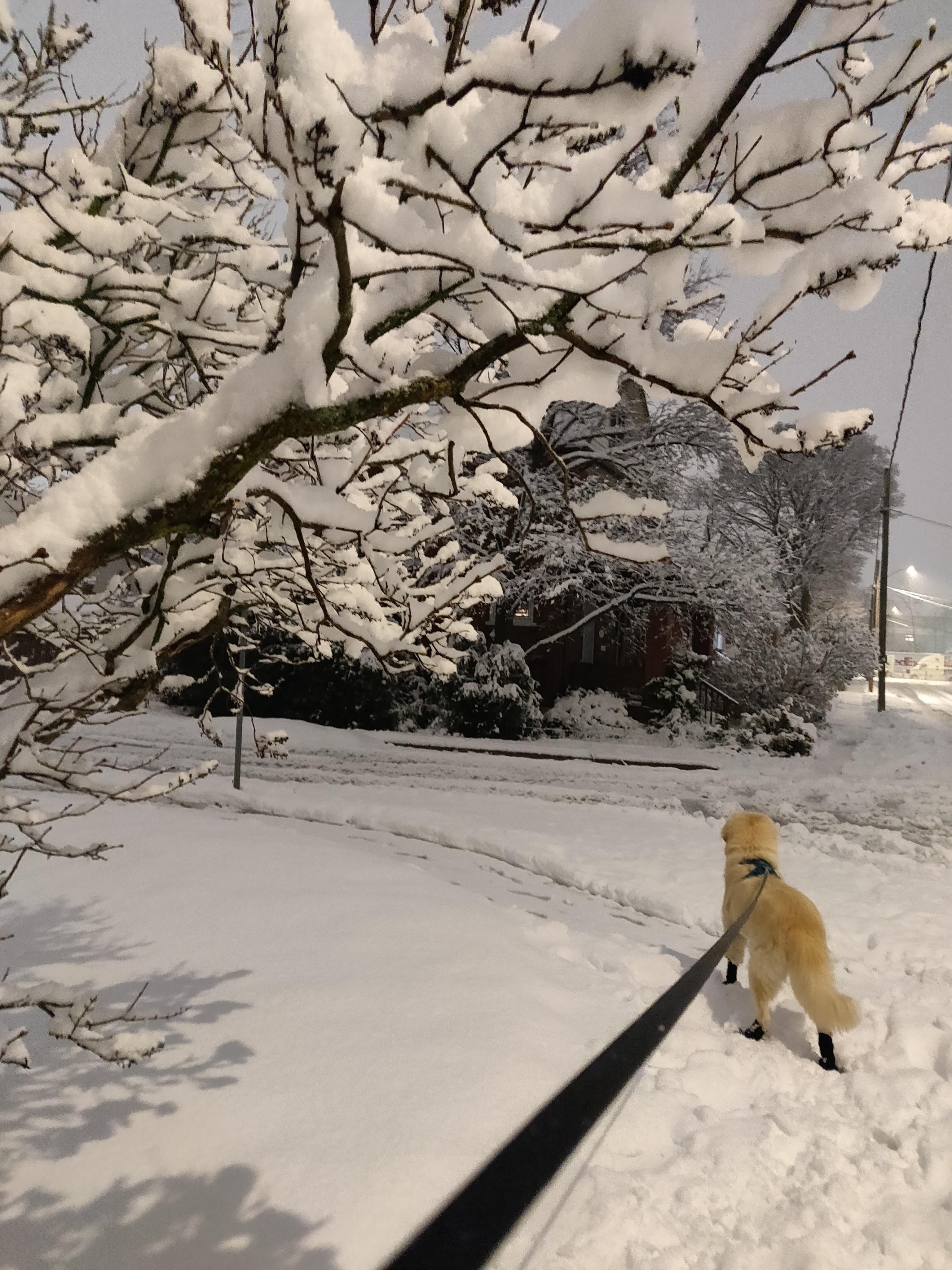 A snowy residential intersection, with a dog at the end of a leash, looking onto the snow-covered street.